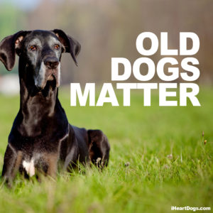 Senior pets make great companions
