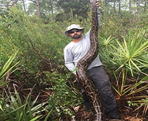 Catching Pythons With Science, Not Guns or Knives